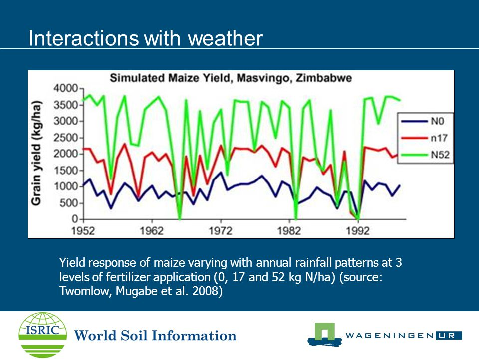Interactions with weather Yield response of maize varying with annual rainfall patterns at 3 levels of fertilizer application (0, 17 and 52 kg N/ha) (source: Twomlow, Mugabe et al.