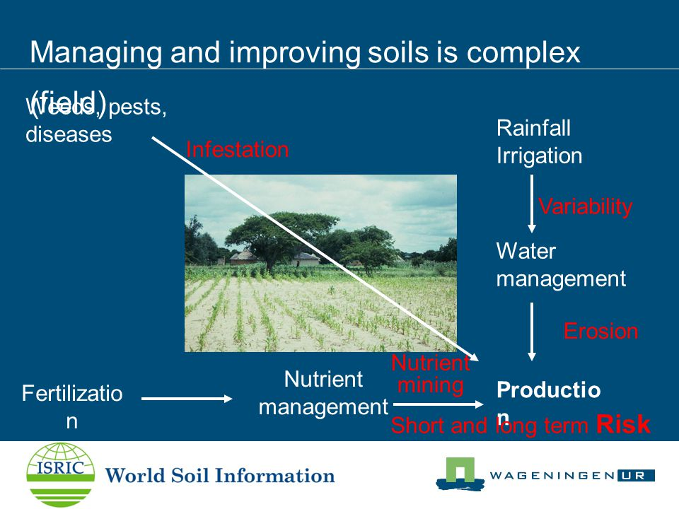 Managing and improving soils is complex (field) Rainfall Irrigation Fertilizatio n Weeds, pests, diseases Productio n Water management Nutrient management Short and long term Risk Nutrient mining Variability Erosion Infestation