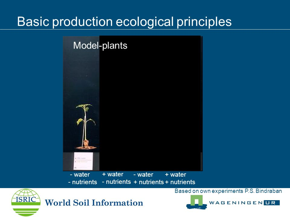 Basic production ecological principles Prem Bindraban - water - nutrients + water + nutrients + water - nutrients - water + nutrients Model-plants Based on own experiments P.S.