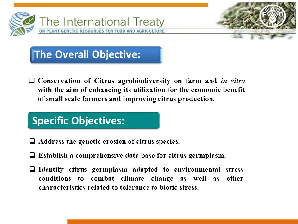  Conservation of Citrus agrobiodiversity on farm and in vitro with the aim of enhancing its utilization for the economic benefit of small scale farme
