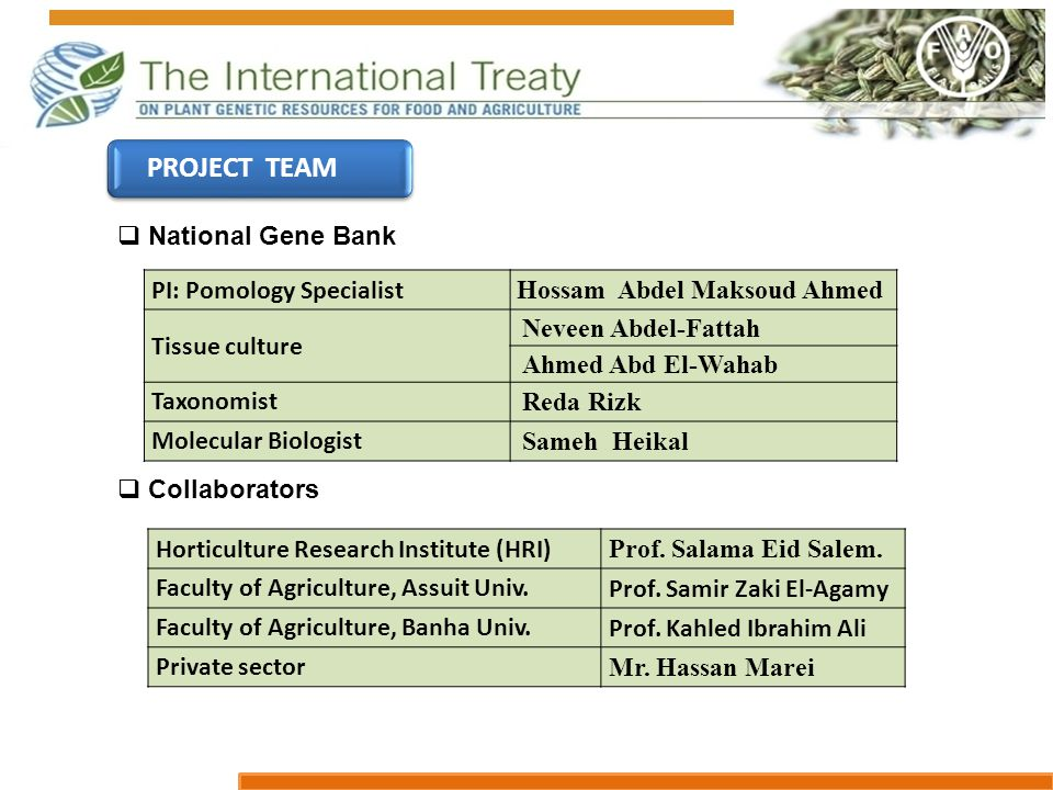 PROJECT TEAM  National Gene Bank  Collaborators PI: Pomology Specialist Hossam Abdel Maksoud Ahmed Tissue culture Neveen Abdel-Fattah Ahmed Abd El-Wahab Taxonomist Reda Rizk Molecular Biologist Sameh Heikal Horticulture Research Institute (HRI) Prof.