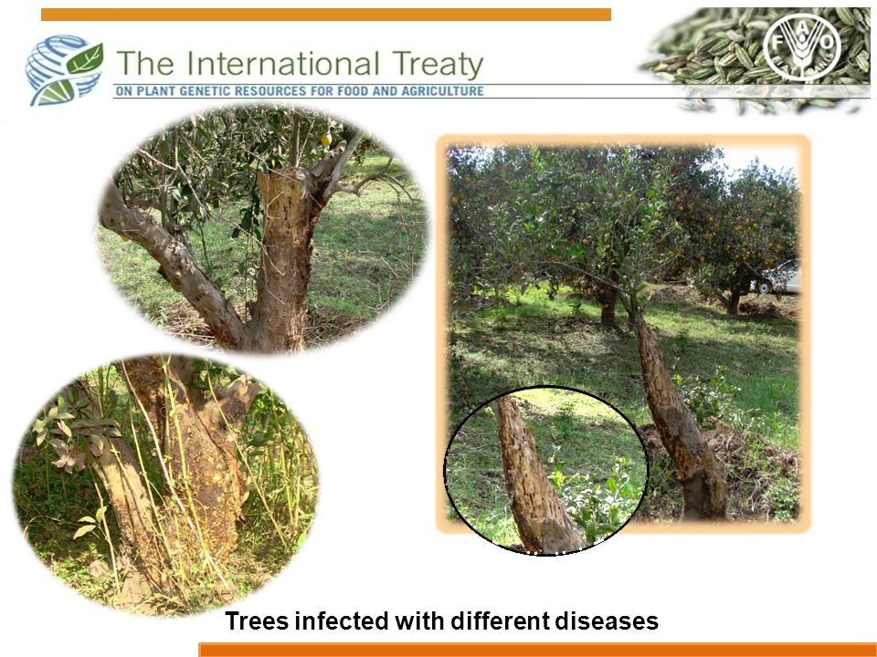 Trees infected with different diseases