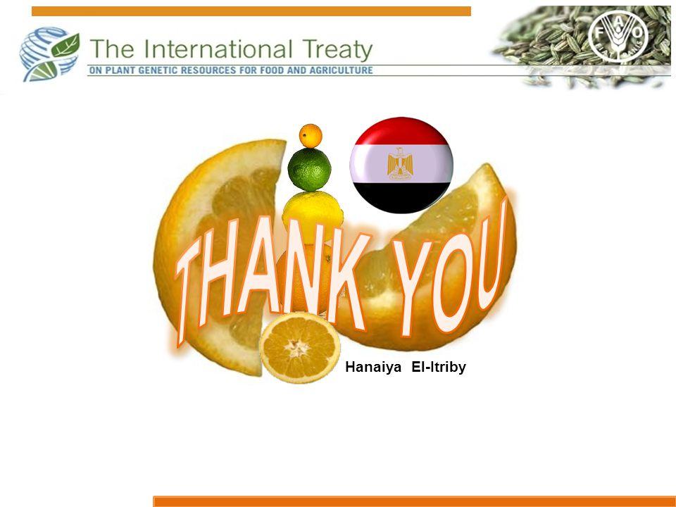 Hanaiya El-Itriby