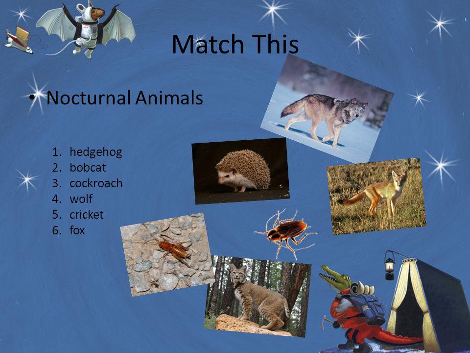 Match This Nocturnal Animals 1.hedgehog 2.bobcat 3.cockroach 4.wolf 5.cricket 6.fox
