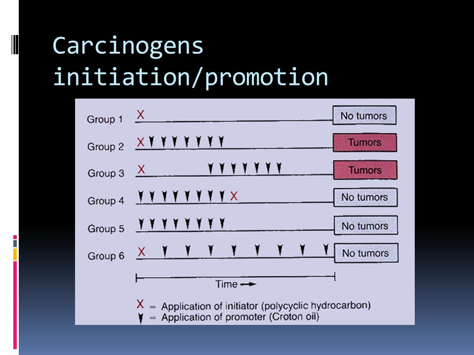 Carcinogens initiation/promotion