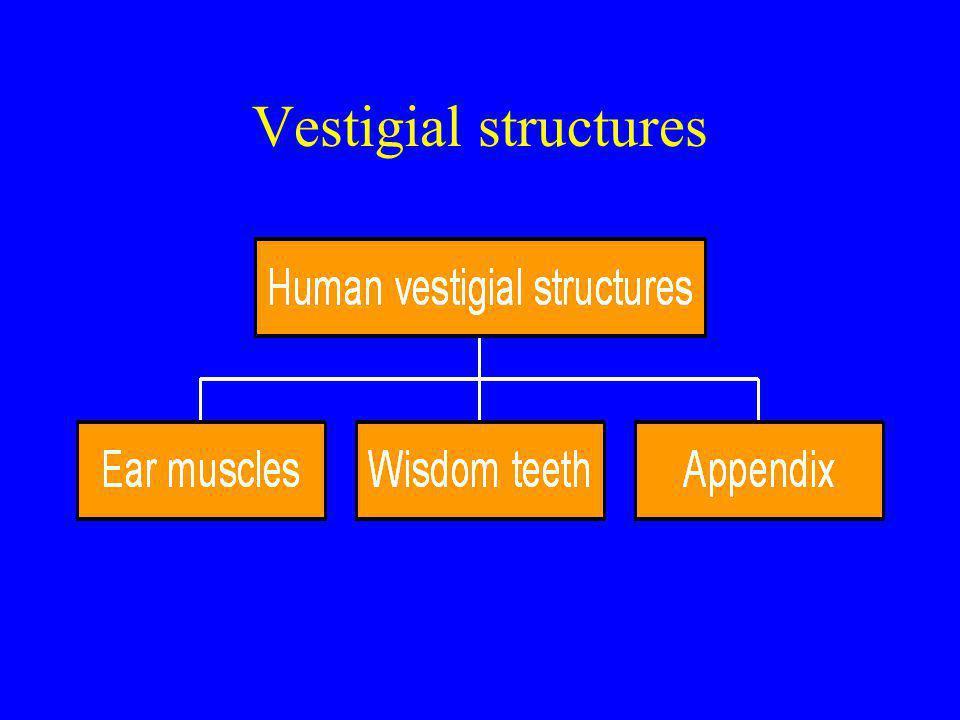 Vestigial structures