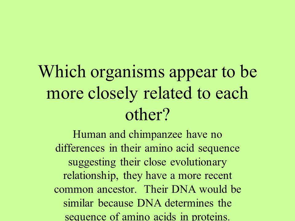 Which organisms appear to be more closely related to each other? Human and chimpanzee have no differences in their amino acid sequence suggesting thei
