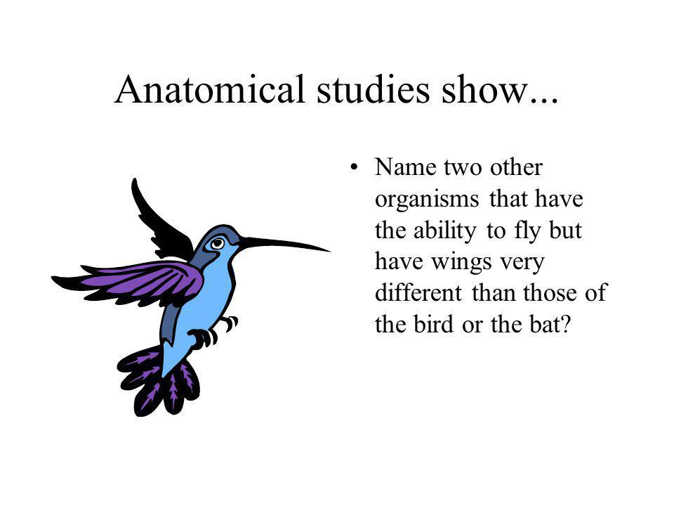 Analogous structures Butterflies or insects have wings but they are very different from the birds.
