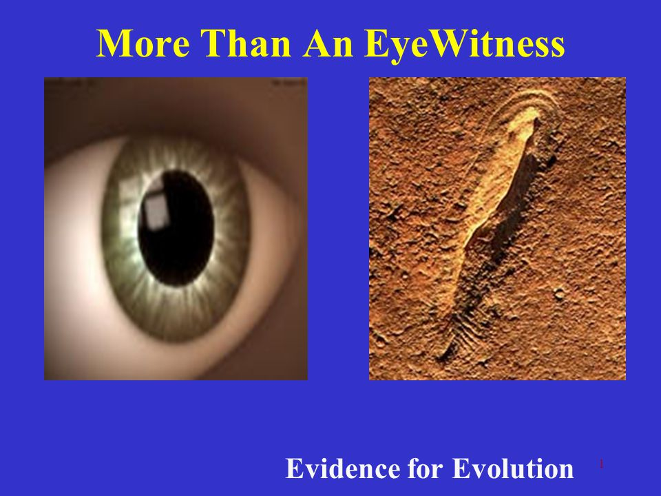 2 Sources of Evidence From the fossil recordFrom studies of anatomy From studies of embryology From studies of DNA From observation Biochemistry