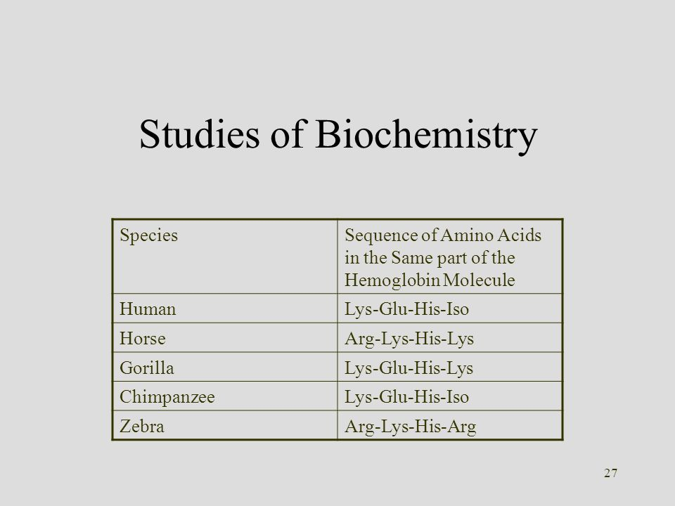 27 Studies of Biochemistry SpeciesSequence of Amino Acids in the Same part of the Hemoglobin Molecule HumanLys-Glu-His-Iso HorseArg-Lys-His-Lys Gorill