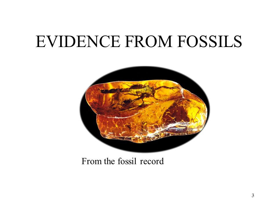 3 EVIDENCE FROM FOSSILS From the fossil record