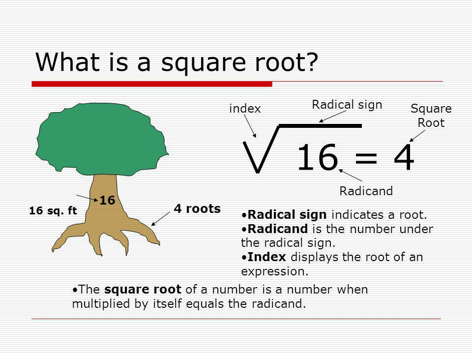 What is a square root? 16 4 roots 16 sq. ft Radical sign indicates a root. Radicand is the number under the radical sign. Index displays the root of a
