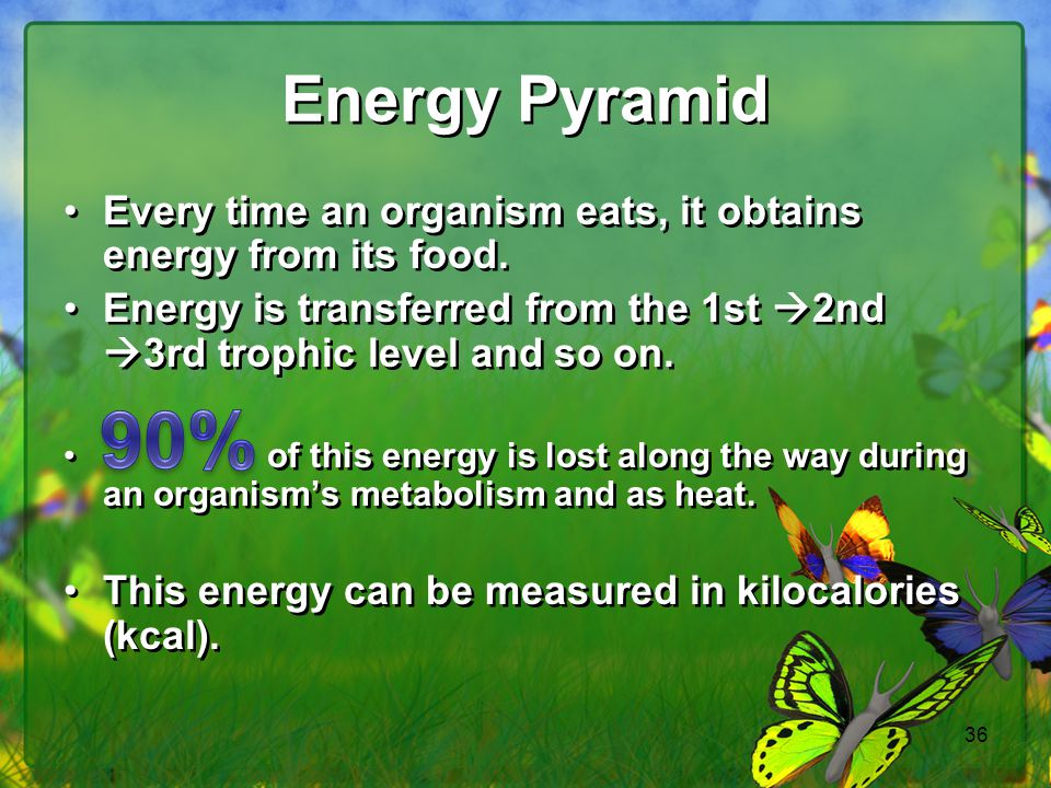 36 Energy Pyramid Every time an organism eats, it obtains energy from its food. Energy is transferred from the 1st  2nd  3rd trophic level and so on