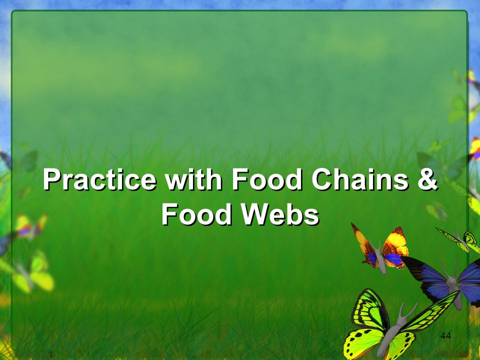 44 Practice with Food Chains & Food Webs
