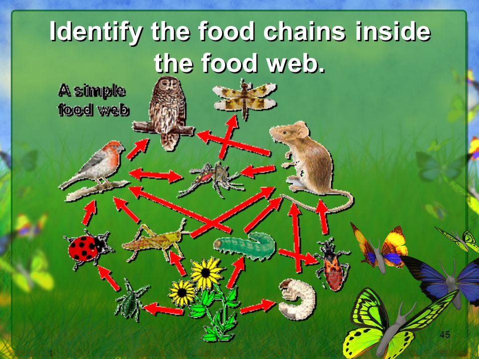 45 Identify the food chains inside the food web.