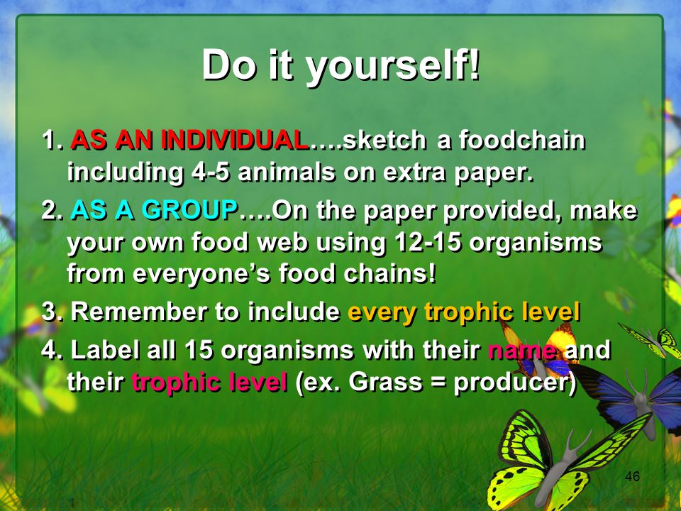 46 Do it yourself! 1. AS AN INDIVIDUAL….sketch a foodchain including 4-5 animals on extra paper. 2. AS A GROUP….On the paper provided, make your own f