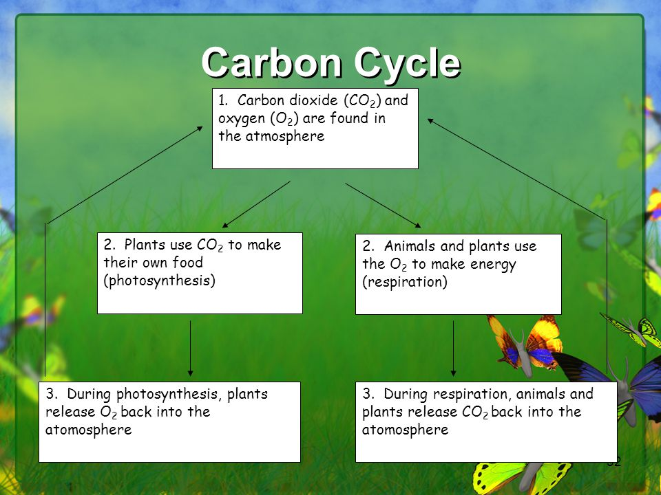 52 Carbon Cycle 1. Carbon dioxide (CO 2 ) and oxygen (O 2 ) are found in the atmosphere 2. Animals and plants use the O 2 to make energy (respiration)