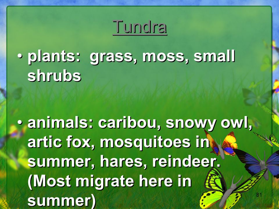 81 Tundra plants: grass, moss, small shrubs animals: caribou, snowy owl, artic fox, mosquitoes in summer, hares, reindeer. (Most migrate here in summe