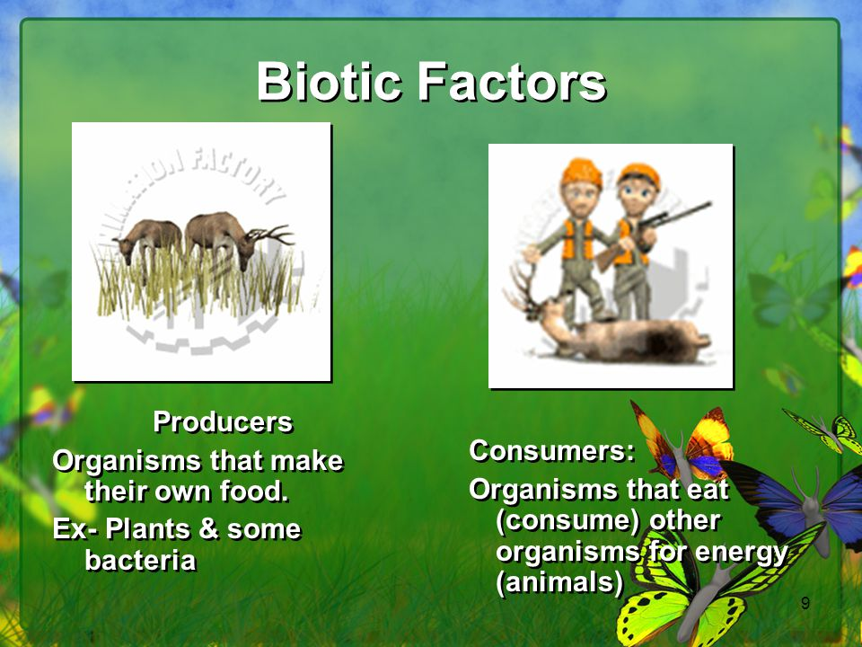 9 Biotic Factors Producers Organisms that make their own food. Ex- Plants & some bacteria Producers Organisms that make their own food. Ex- Plants & s