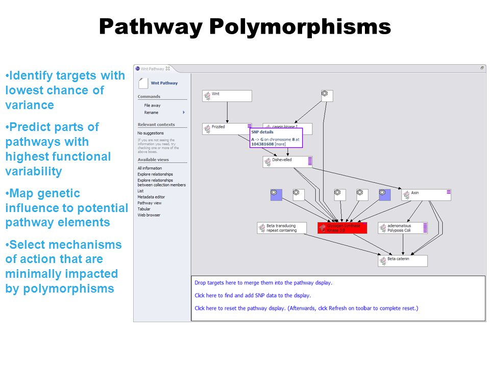 Pathway Polymorphisms Identify targets with lowest chance of variance Predict parts of pathways with highest functional variability Map genetic influence to potential pathway elements Select mechanisms of action that are minimally impacted by polymorphisms