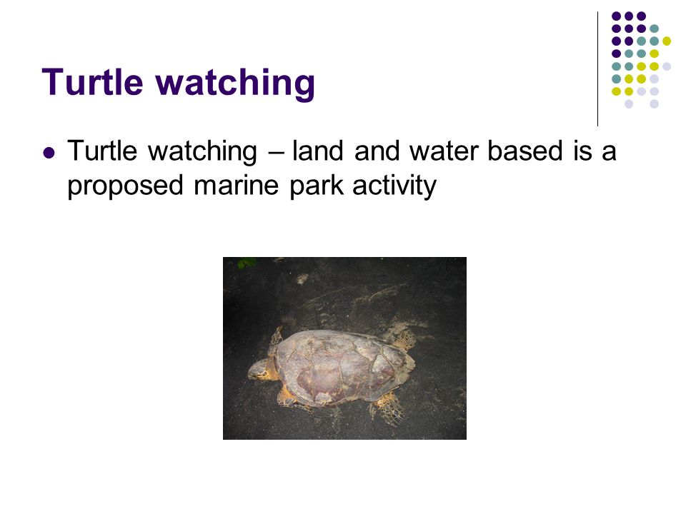 Turtle watching Turtle watching – land and water based is a proposed marine park activity