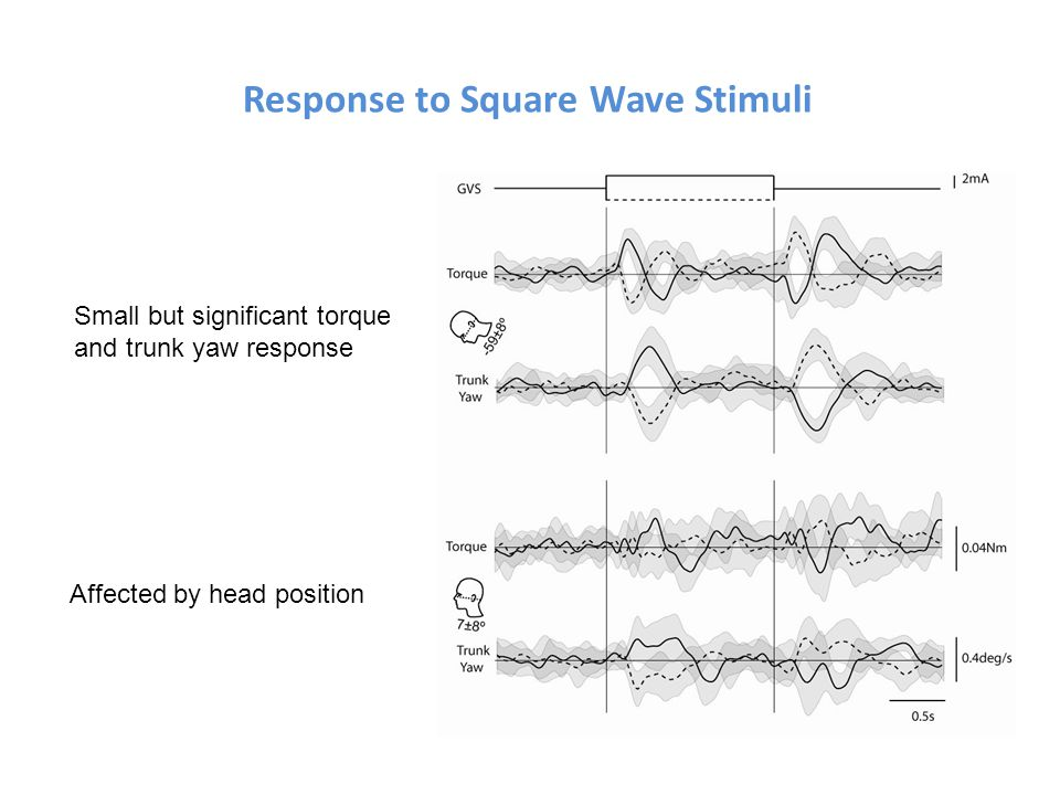 Response to Square Wave Stimuli Small but significant torque and trunk yaw response Affected by head position