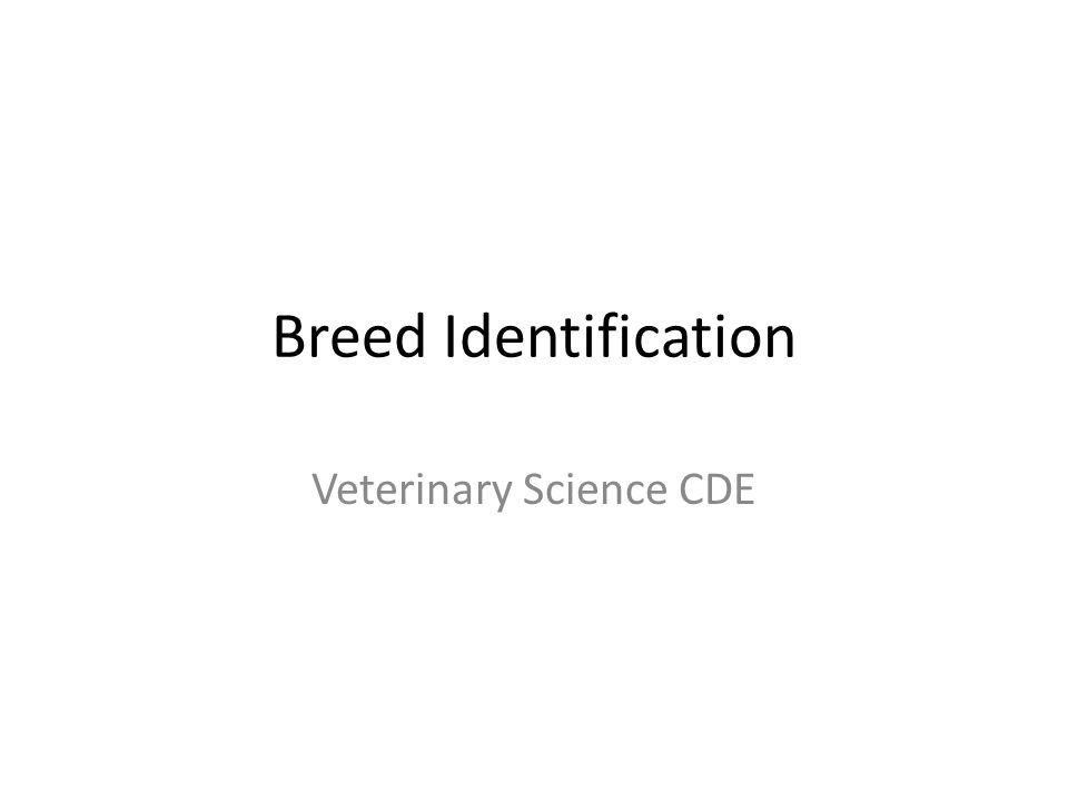 Breed Identification Veterinary Science CDE