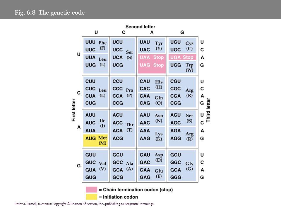 Peter J. Russell, iGenetics: Copyright © Pearson Education, Inc., publishing as Benjamin Cummings. Fig. 6.8 The genetic code