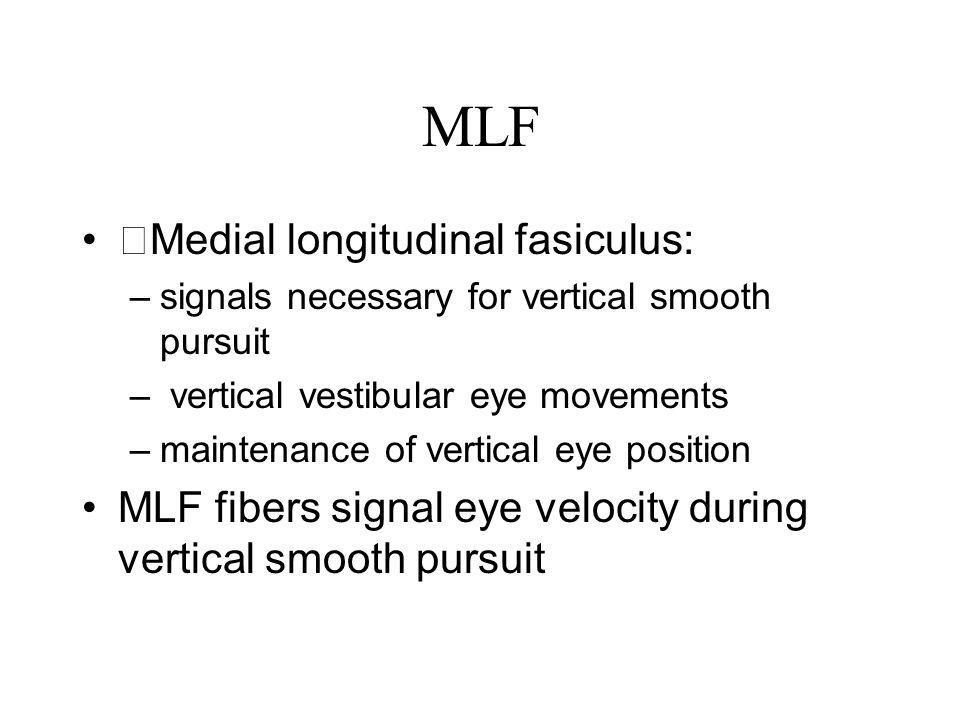 MLF Medial longitudinal fasiculus: –signals necessary for vertical smooth pursuit – vertical vestibular eye movements –maintenance of vertical eye pos