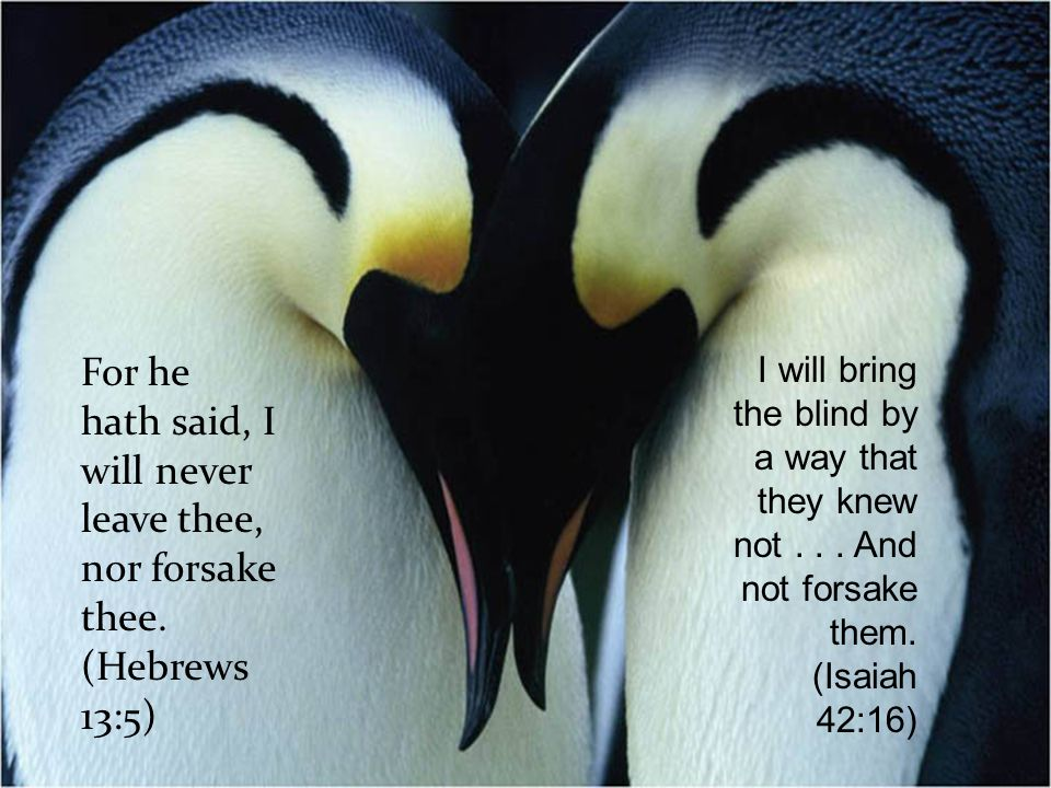 For he hath said, I will never leave thee, nor forsake thee.