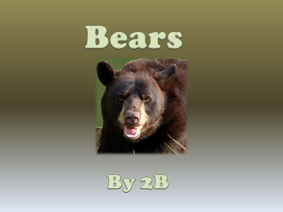  Some bears live in Asia.  Bear eat leaves and meat.  Bear can weigh over 1,700 pounds.