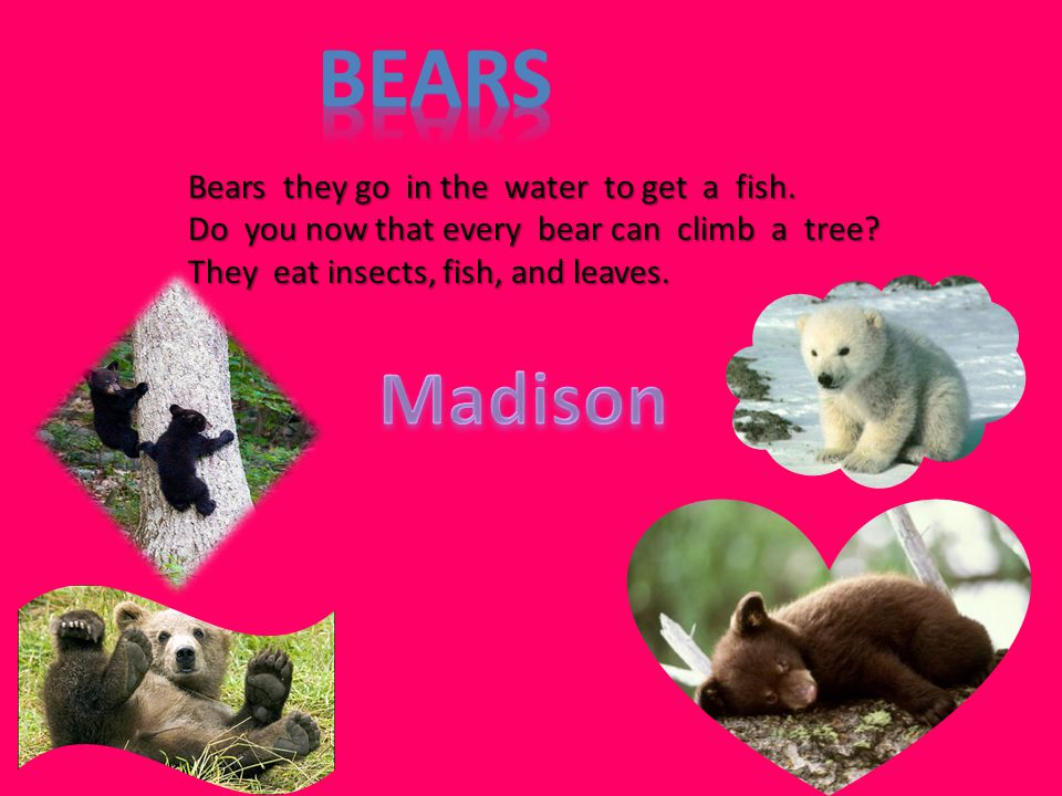Bears they go in the water to get a fish. Do you now that every bear can climb a tree? They eat insects, fish, and leaves.