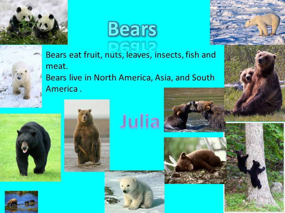 Bears eat fruit, nuts, leaves, insects, fish and meat. Bears live in North America, Asia, and South America.