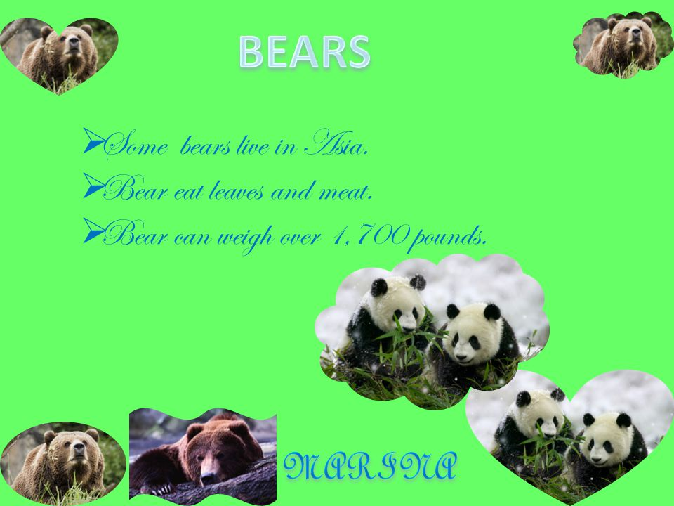  Bears are found in Alaska, the Arctic, North America, and South America.