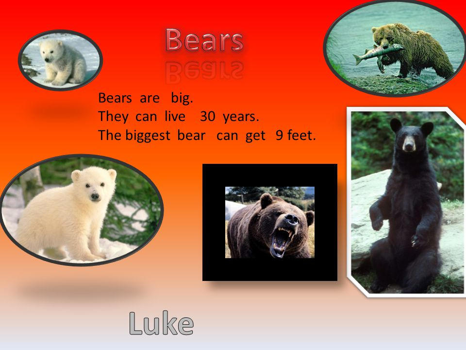 Bears are big. They can live 30 years. The biggest bear can get 9 feet.