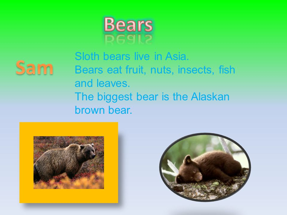 Sloth bears live in Asia. Bears eat fruit, nuts, insects, fish and leaves. The biggest bear is the Alaskan brown bear.