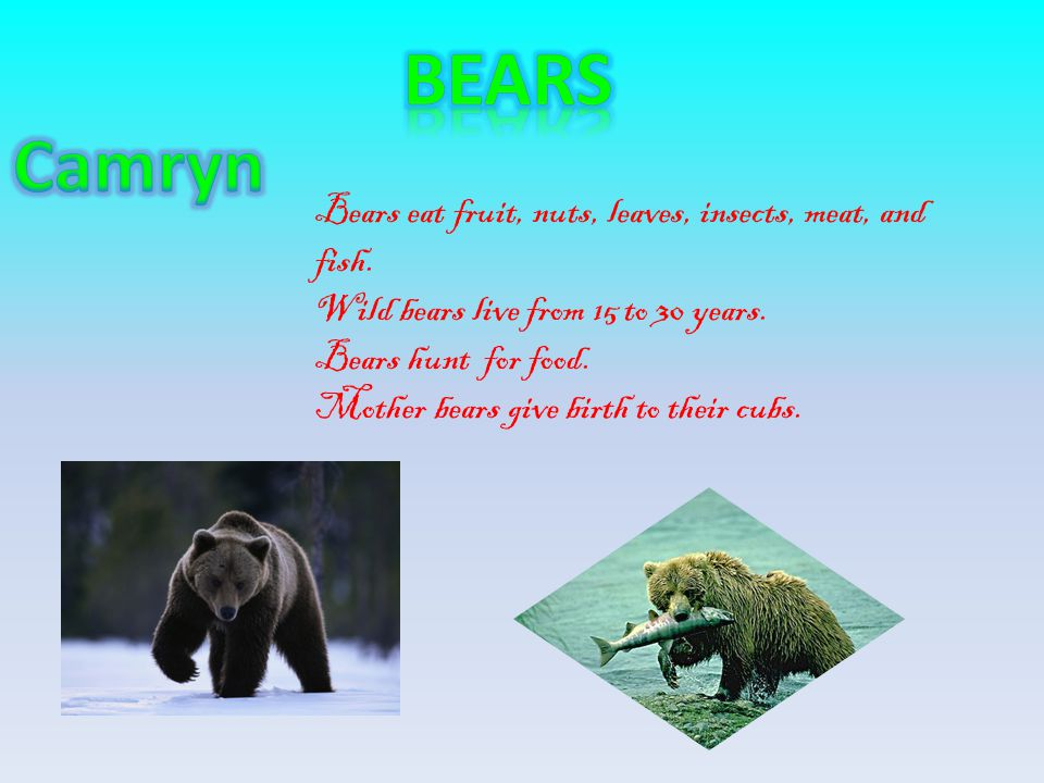 Bears eat fruit, nuts, leaves, insects, meat, and fish. Wild bears live from 15 to 30 years. Bears hunt for food. Mother bears give birth to their cub