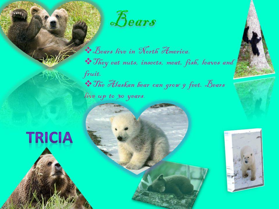  Many bears sleep through winter.  Polar bears swim well.  They eat a lot of food.