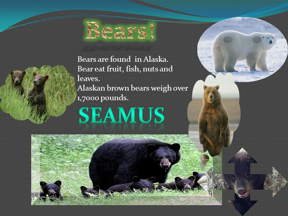 Bears eat fruit, nuts, leaves, insects & fish.