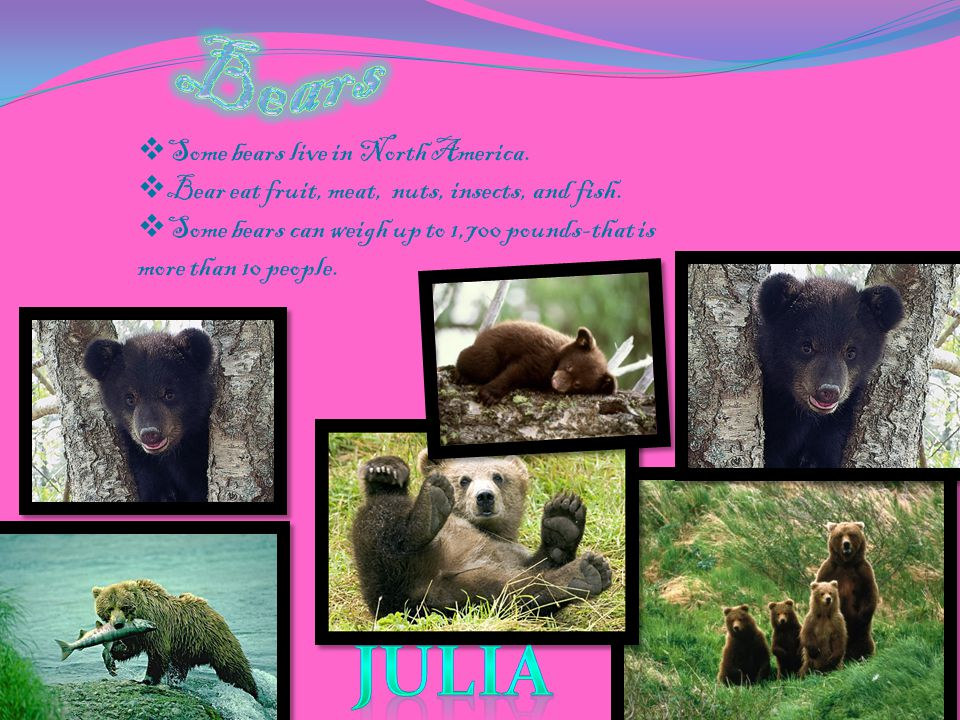  Bears are fascinating. Bears live in Alaska, Antarctica, North America South America and Asia.
