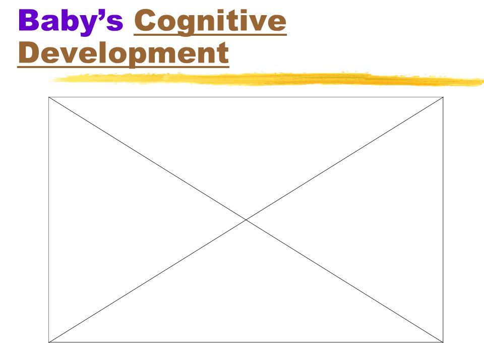 Baby's Cognitive DevelopmentCognitive Development