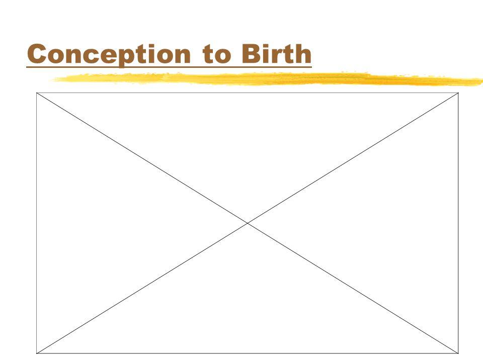 Conception to Birth