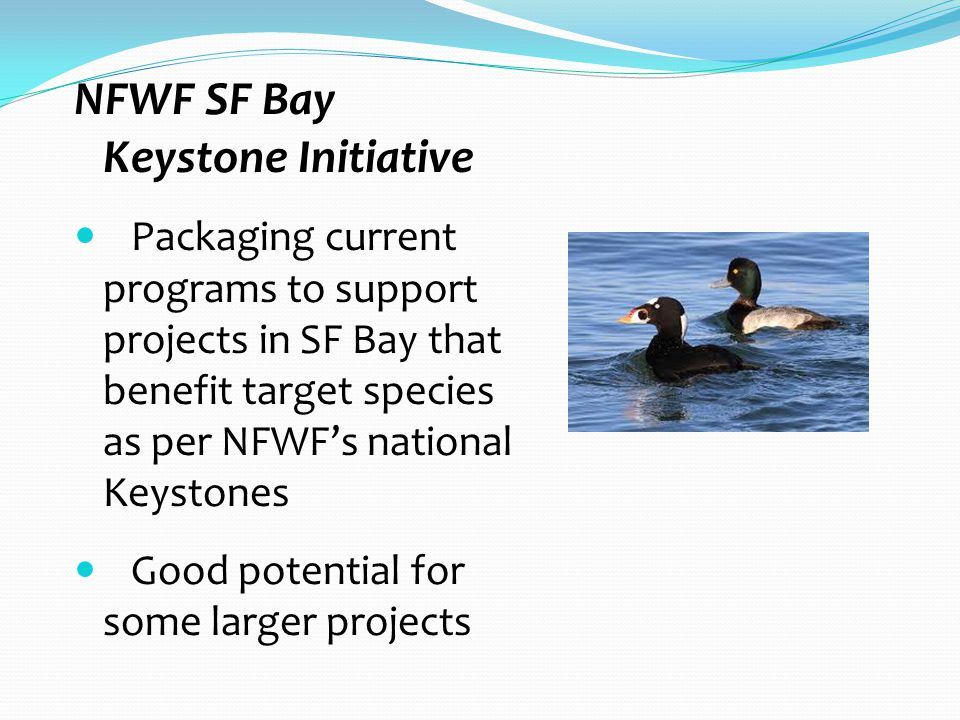 NFWF SF Bay Keystone Initiative Packaging current programs to support projects in SF Bay that benefit target species as per NFWF's national Keystones Good potential for some larger projects