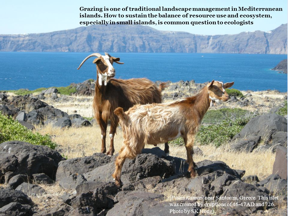 Grazing is one of traditional landscape management in Mediterranean islands.