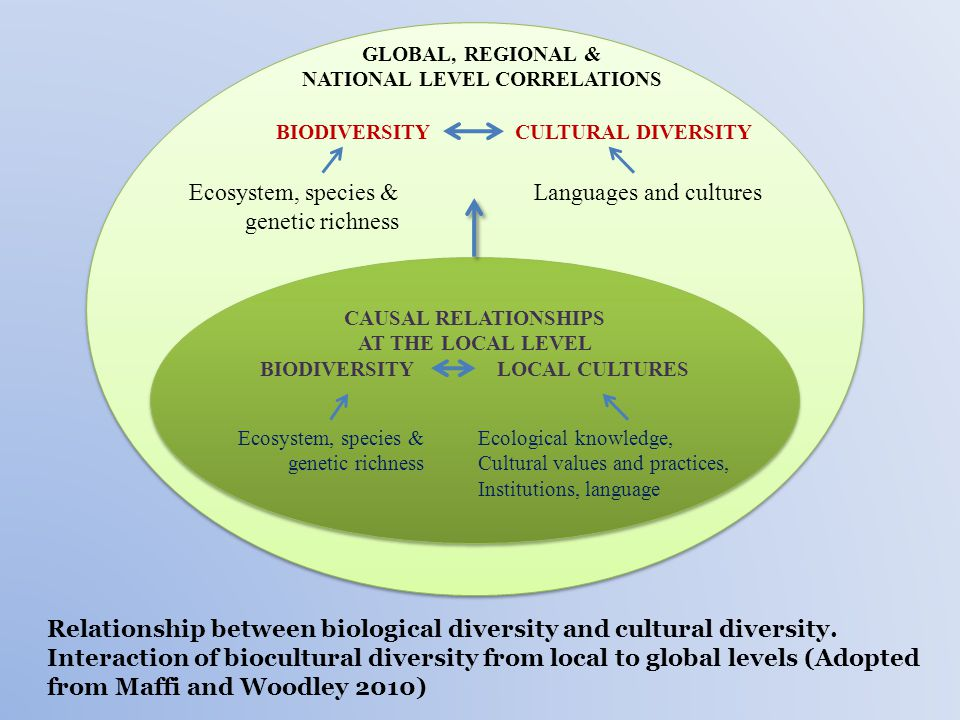 Relationship between biological diversity and cultural diversity.