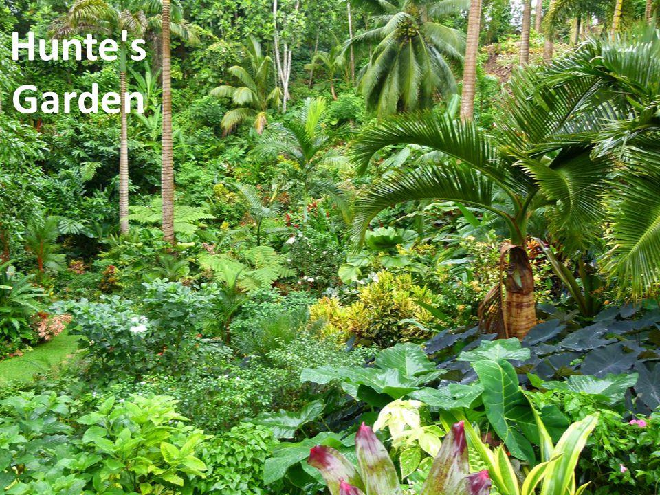 Hunte s Garden