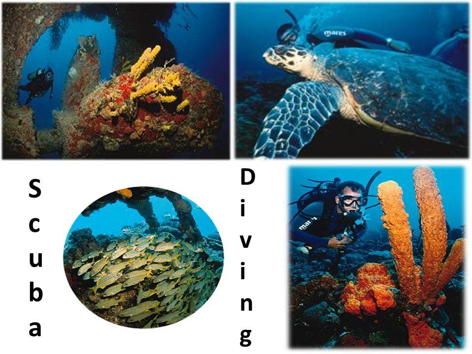 DivingDiving ScubaScuba