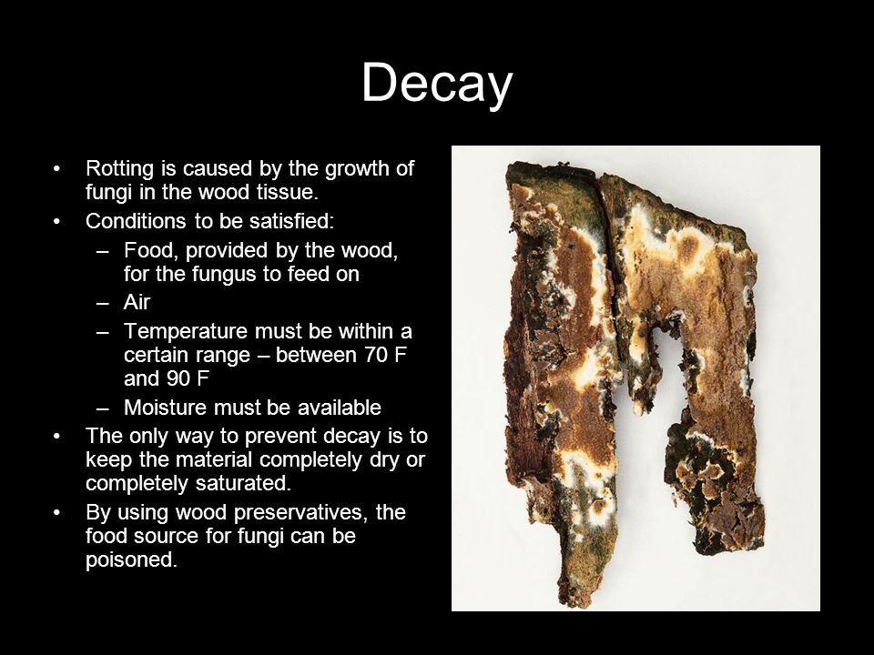 Decay Rotting is caused by the growth of fungi in the wood tissue.