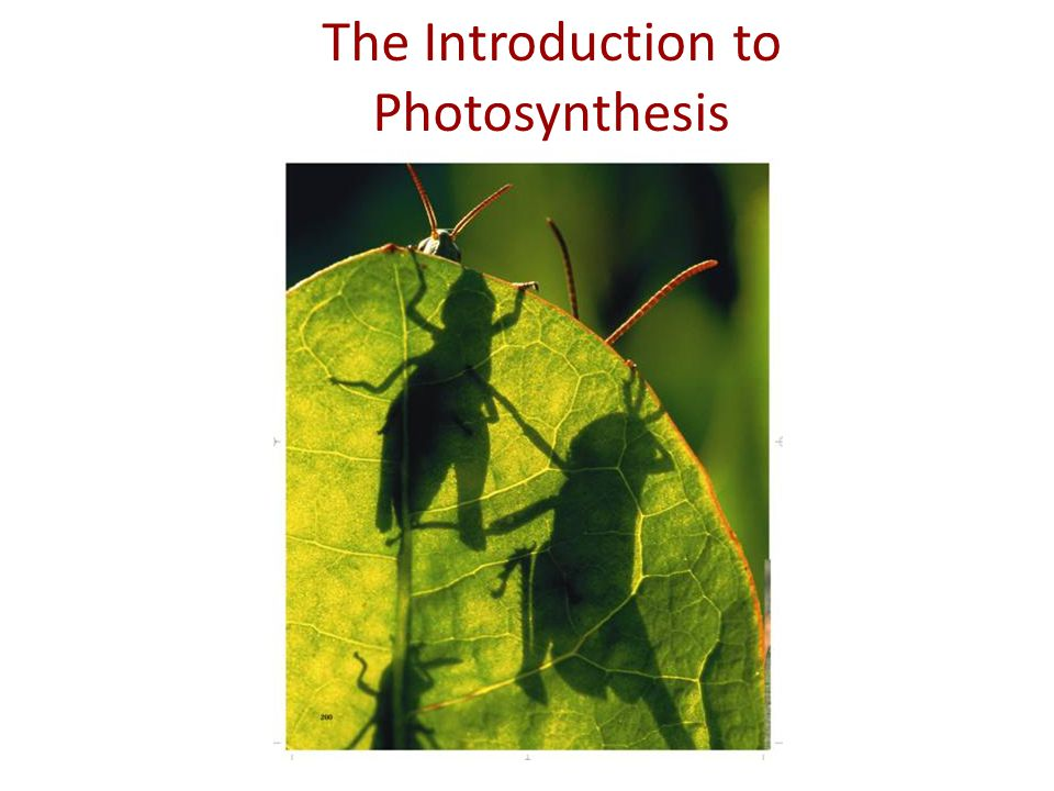 IB Assessment Statement State that photosynthesis involves the conversion of light energy into chemical energy.