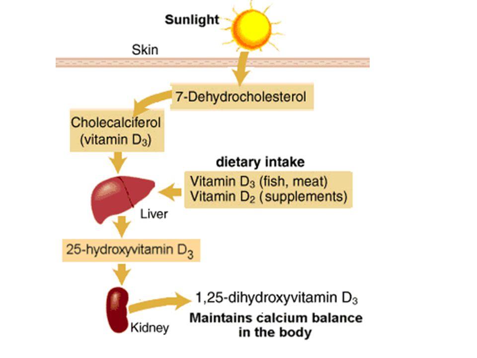 Has Fat a Protective Role for the Skeleton. Pros & Cons Rosen CJ et al.